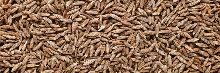 Read more about the article Cumin Seed IPM