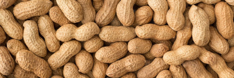 Read more about the article Peanut